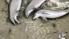 thehunt-delfines