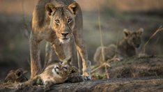 thehunt-leona