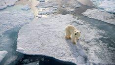 thehunt-oso-polar