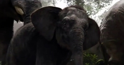thejunglebook-bebe-elefante