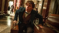fantasticbeasts-newt-banco