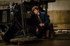fantasticbeasts-newt-escondido