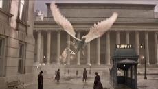 fantasticbeasts-thunderbird-liberado