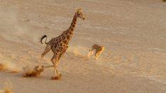 planetearthii-jirafa