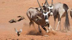 planetearthii-kudu