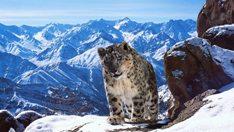 planetearthii-leopardonieves
