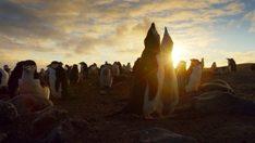 planetearthii-pinguinos